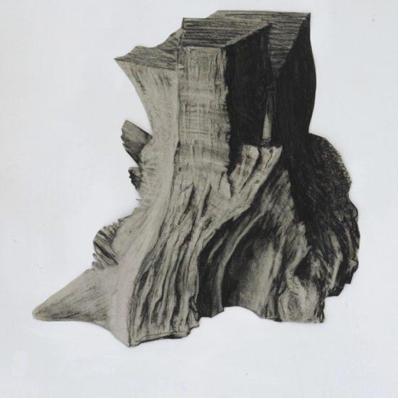 platanus 2, houtskool, siberisch krijt en potlood op papier, circa 33 x 34 cm, 2019