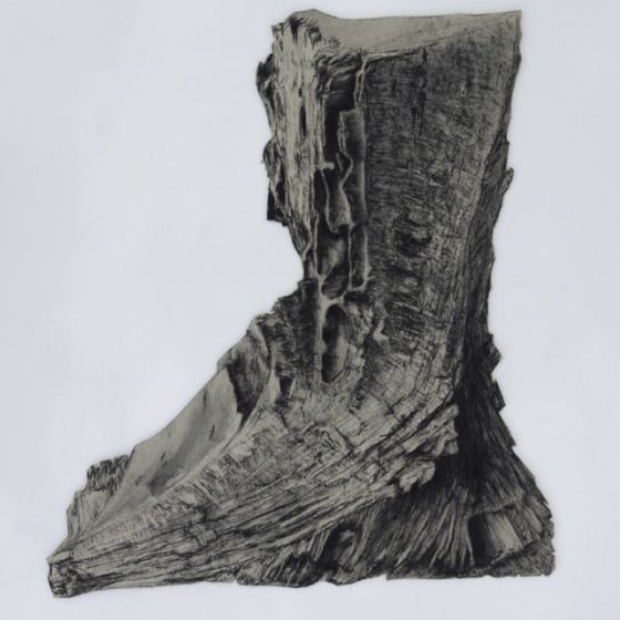 platanus 4, houtskool, siberisch krijt en potlood op papier, circa 40 x 35 cm, 2019
