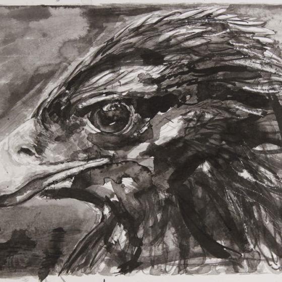 gentle eagle, 30 x 35 cm, inkt op papier, 2018