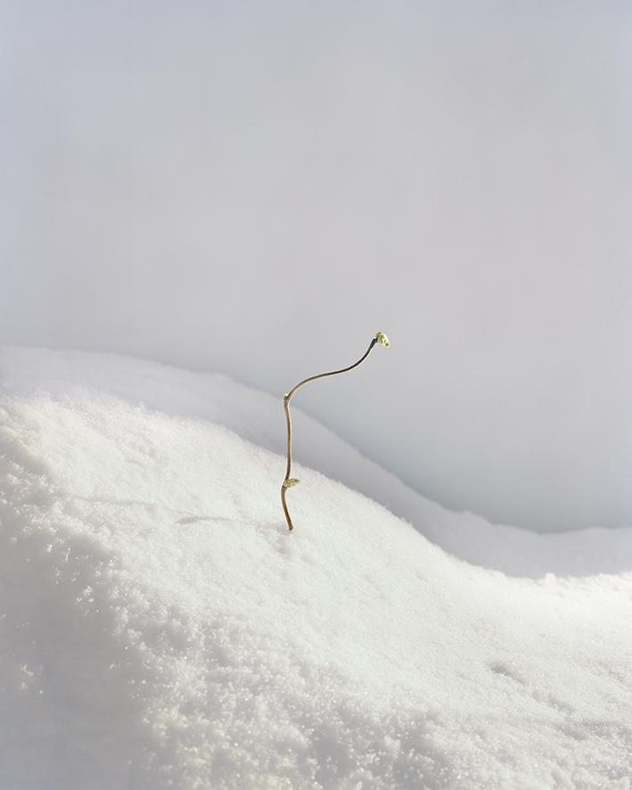 Struggle, foto, 43,5 x 34,8 cm