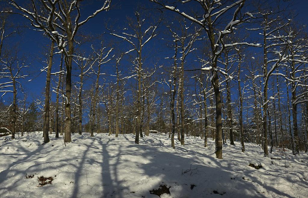 Col de la Chapelotte winterbomen, c-print, 60 x 90 cm