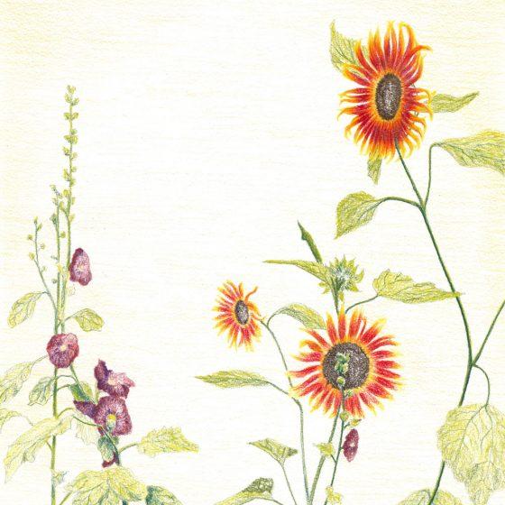 Kloosterpark 3, Potlood op papier, 21 x 30 cm, 2020